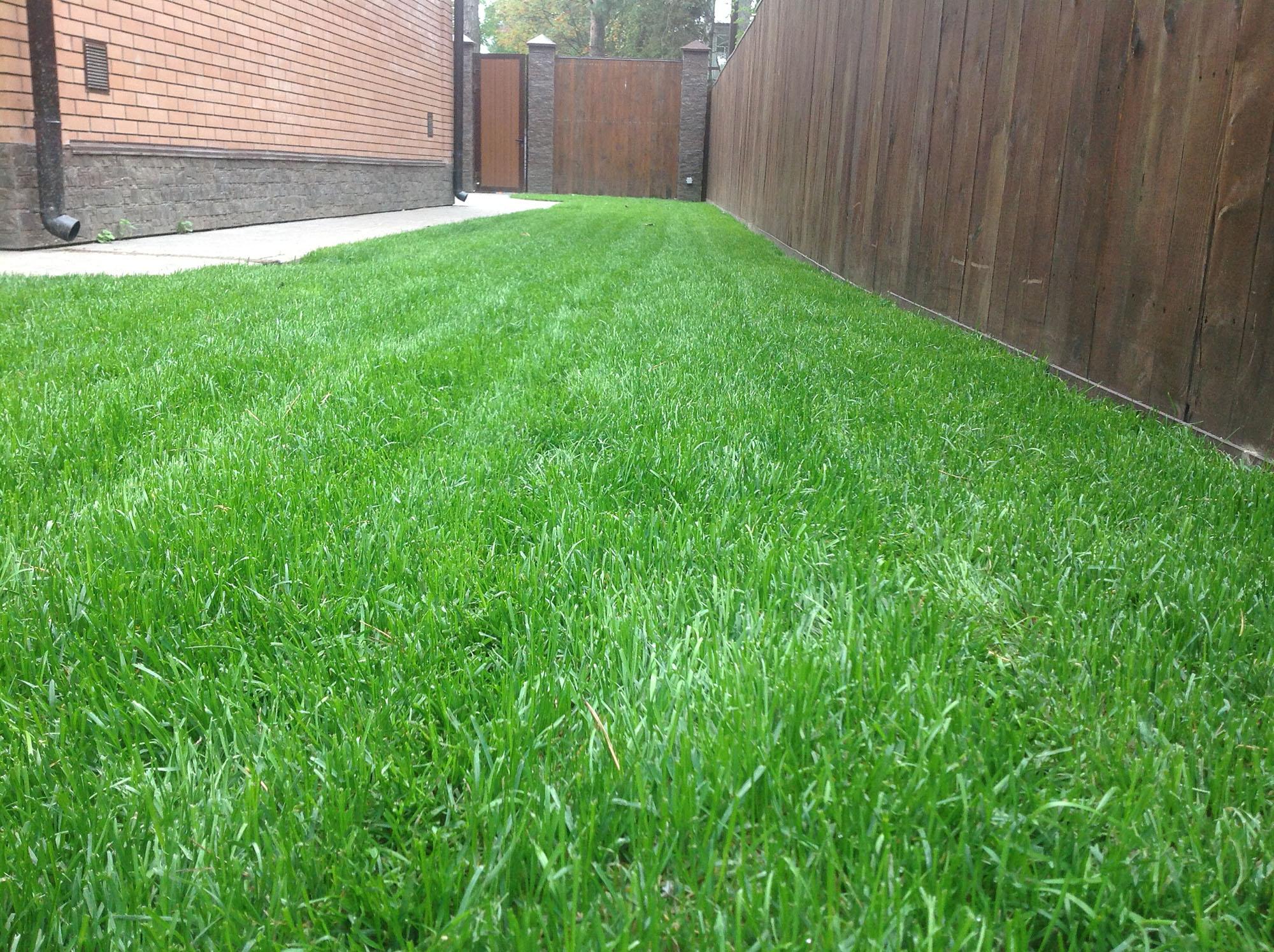 Как сделать хороший опрятный газон на даче своими руками 58