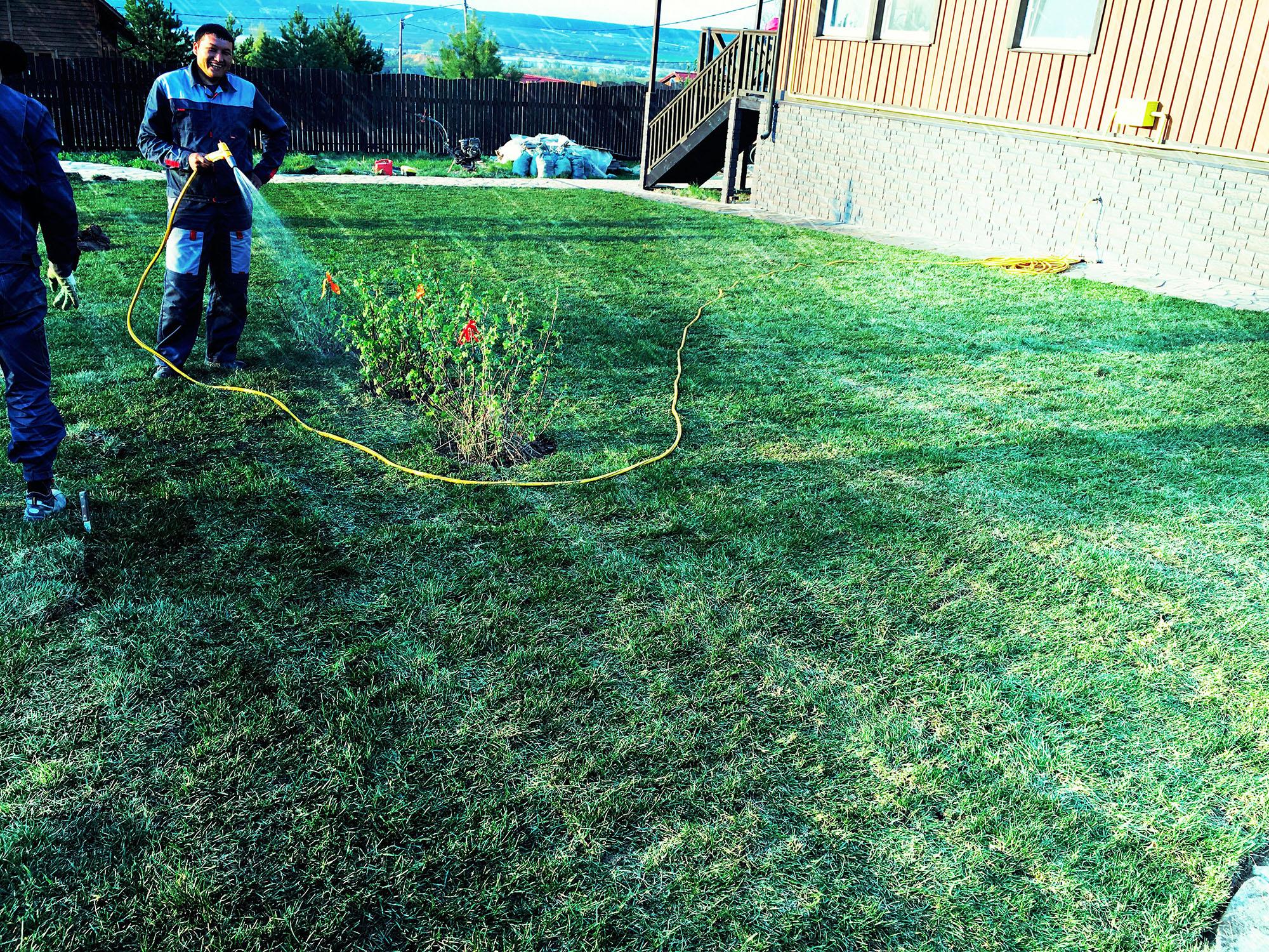 Технологии выращивания рулонного газона 29